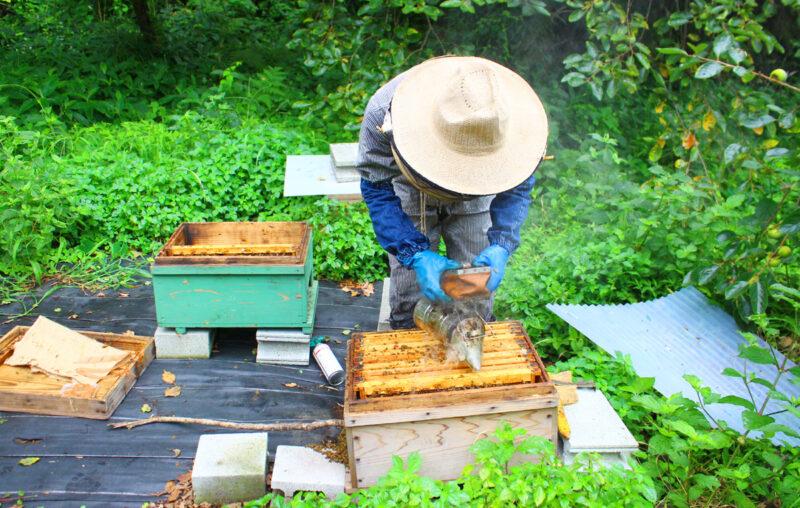 マカナ養蜂園